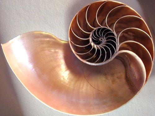 floraWApic-150x150